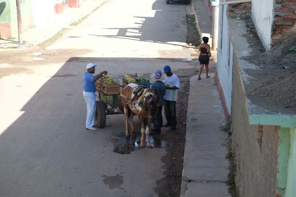 Paard en wagen Cuba