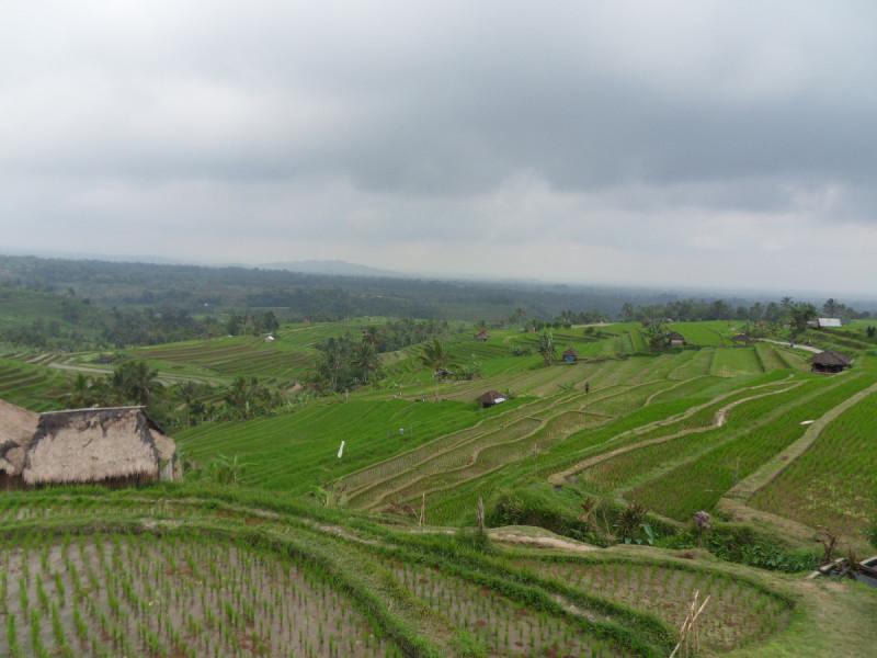 jatiluwih rijstvelden