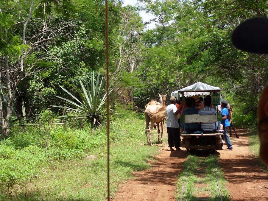 cenotes de cuzama