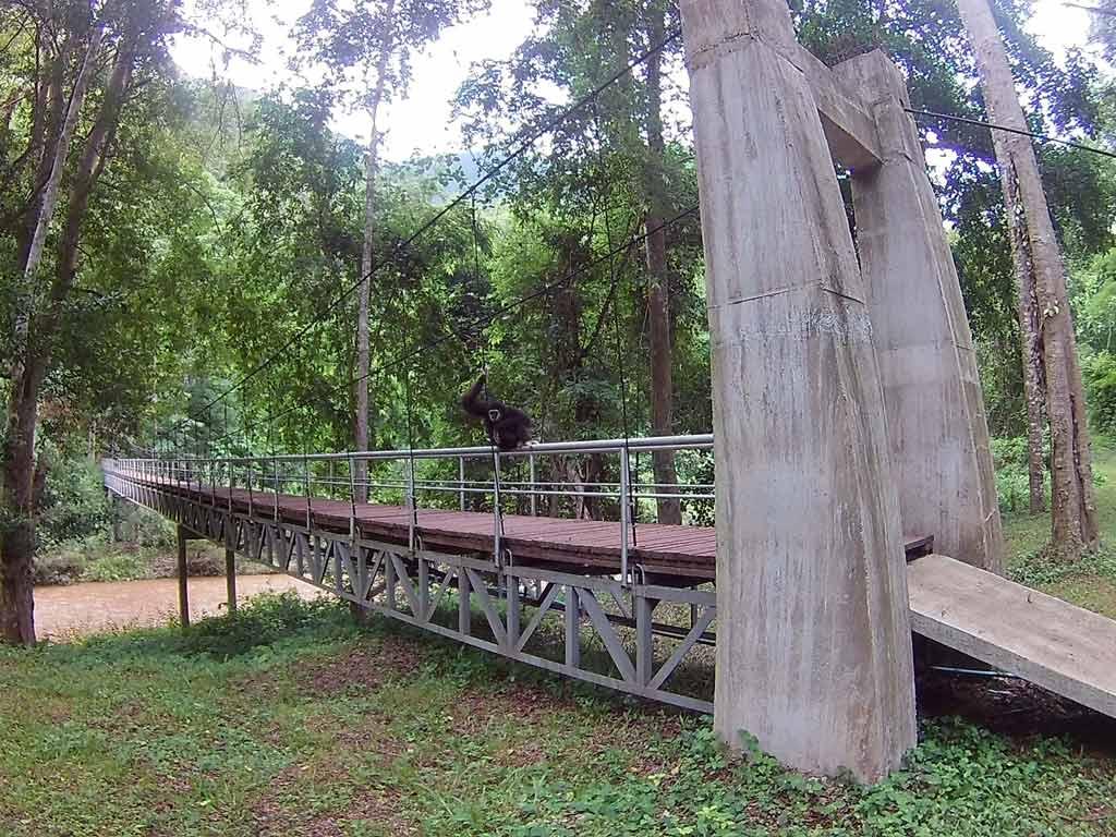 Gibbon Pai