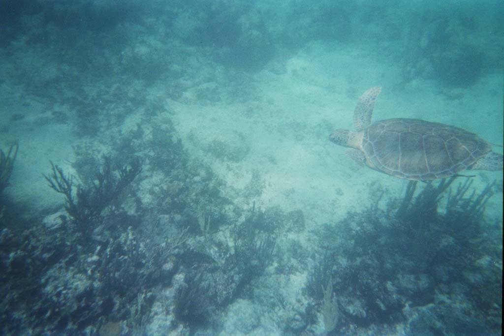 akumal snorkelen